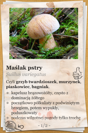 The Mushroom Book (Atlas Grzybów) - iOS (iPhone, iPod touch, iPad)